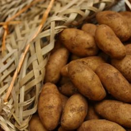 Proper care of potatoes enables large yields.