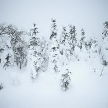 Lines of trees can help block snow drifts