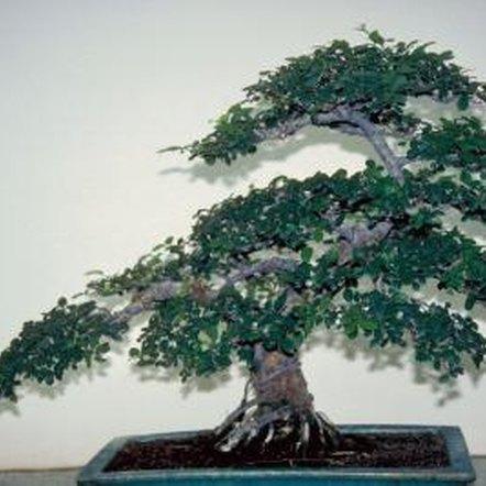 how to make water bonsai