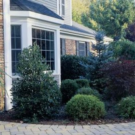 Ornamental trees enhance entryways into the home.