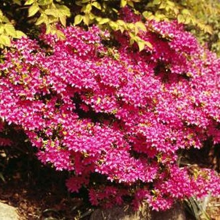 Small flowering bushes work well in various areas of the yard.