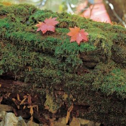 Rotten logs are easy to carve into suitable planters for small gardens.