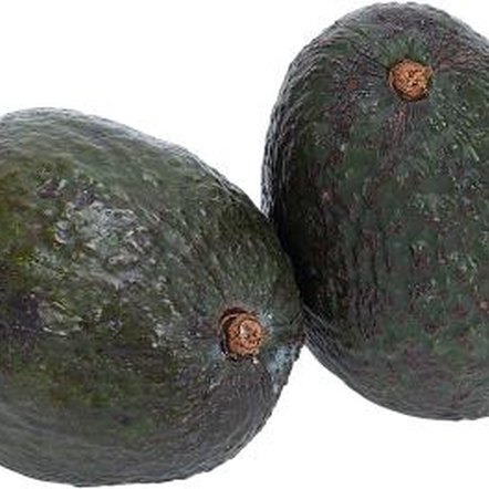 Avocados need nitrogen fertilizer to grow best.