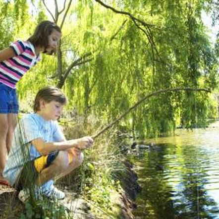 Willow trees are attractive and provide nice shade near ponds, but there are drawbacks.