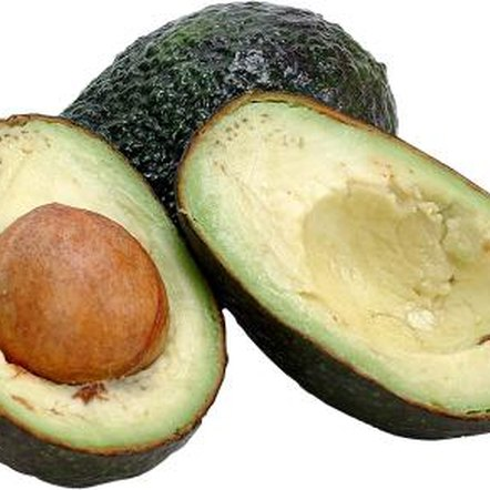 Growers propagate Hass avocadoes from grafted rootstock.
