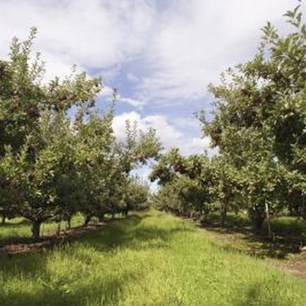 Keep fruit trees healthy by getting rid of damaging bugs.