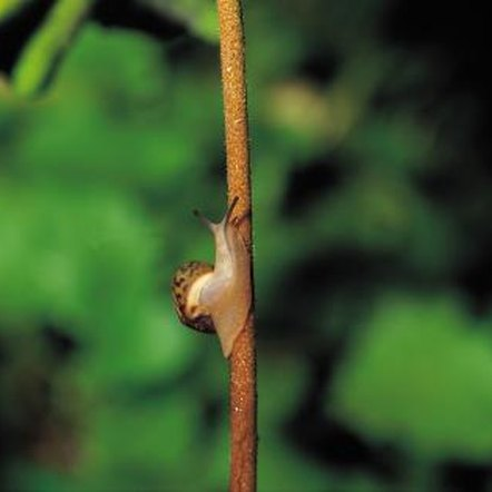 Snails and slugs are an unwelcome sight in any garden.
