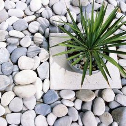 Drought-tolerant plants bring color and life to rock gardens and other dry landscapes, such as xeriscapes.