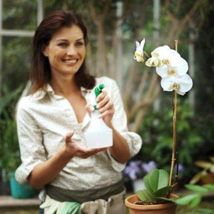 Orchids grow best in humid conditions that mimic their natural habitat.
