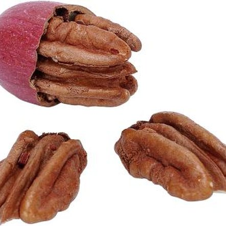 Pecan trees start bearing nuts about three years after planting.