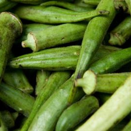 How To Grow Okra Indoors Home Guides Sf Gate