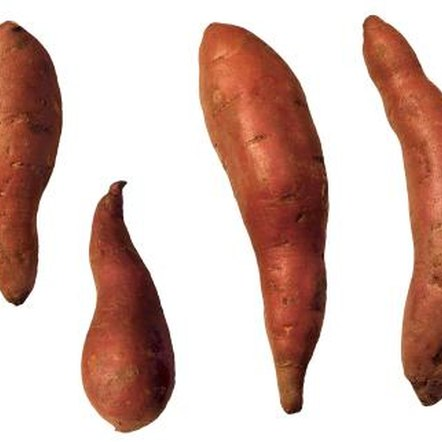 Sweet potato plants are also propagated using small sections of tuber.