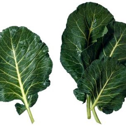 Collards are members of the cabbage family that don't form heads.