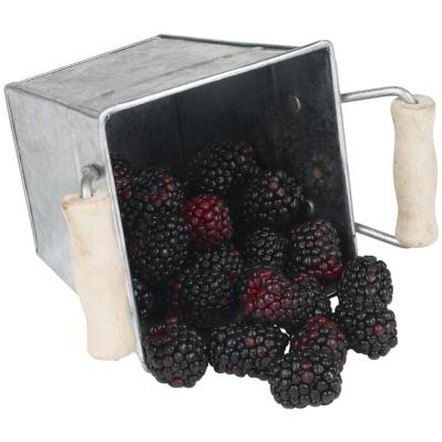 It is possible to grow blackberry bushes from seeds.