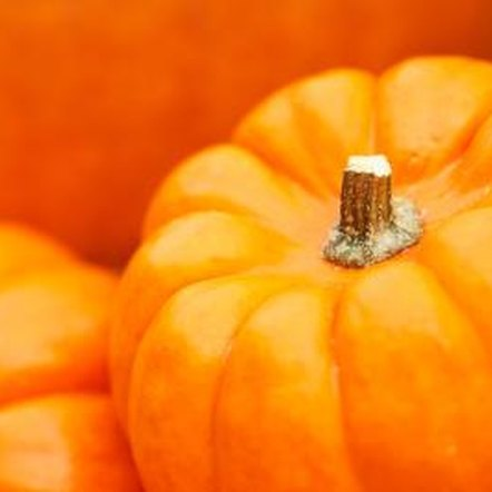 Pumpkins are related to summer squash, melons and cucumbers.