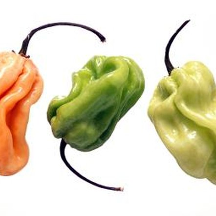 Habanero peppers are among the spiciest of foods.