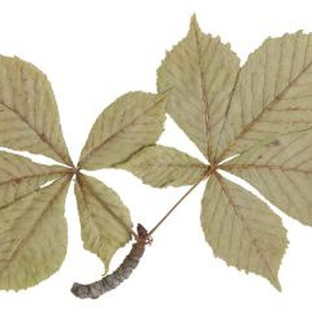 As indicated by their leaves and thorny stems, hawthorn trees are members of the rose family.