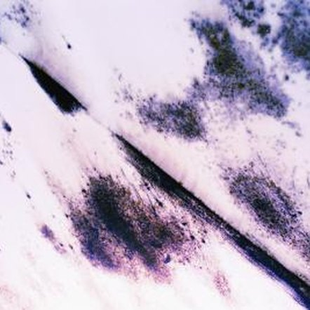 The presence of mold in a house can exacerbate existing respiratory sensitivity.
