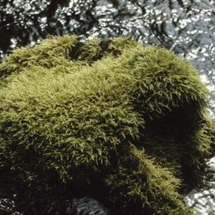 Moss grows on most surfaces.
