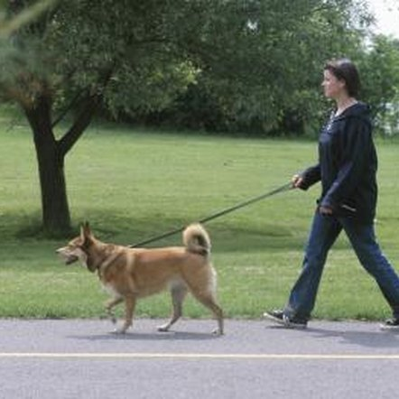 Discourage your dog from nibbling on any types of plant while out walking.