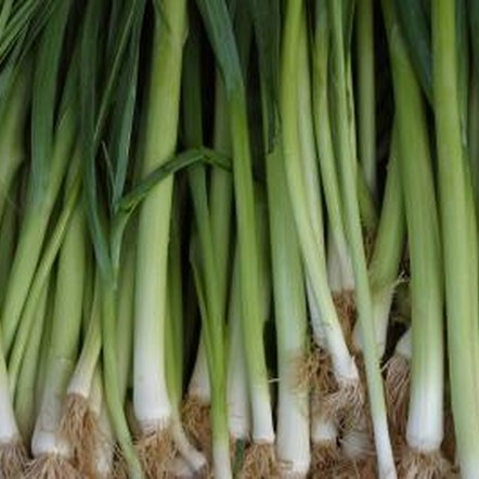 "The edible portion of a leek is actually a bundle of leaf sheaths commonly referred to as its ""stalk."""