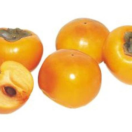 Improper fertilizing practices directly affect the persimmon tree's fruit generation.