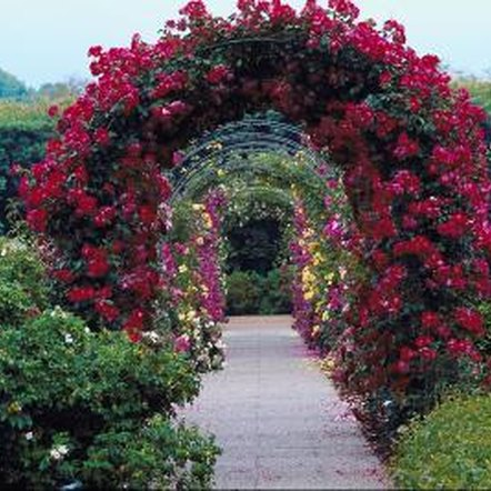 A grapevine arbor is a good choice for a transition area between two areas of your garden.