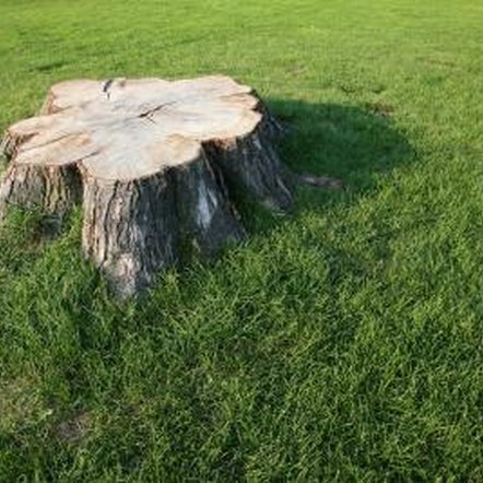 You can remove an unsightly tree stump yourself.