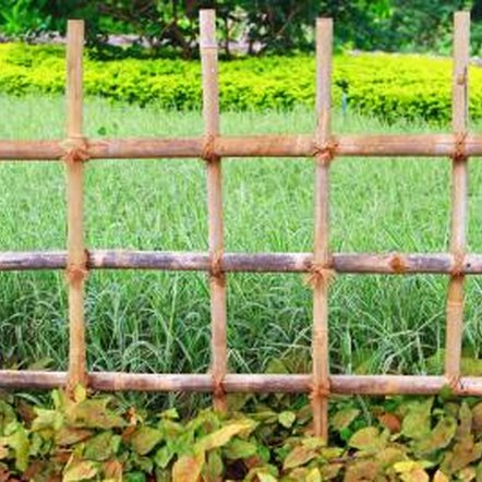 To keep your dog from destroying your garden, sometimes you need more than a fence.
