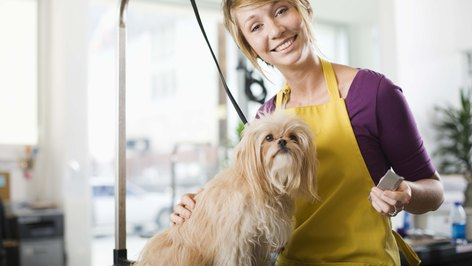 Advantages and Disadvantages for Becoming a Pet Shop Owner