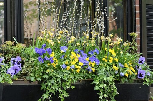 Install Window Boxes