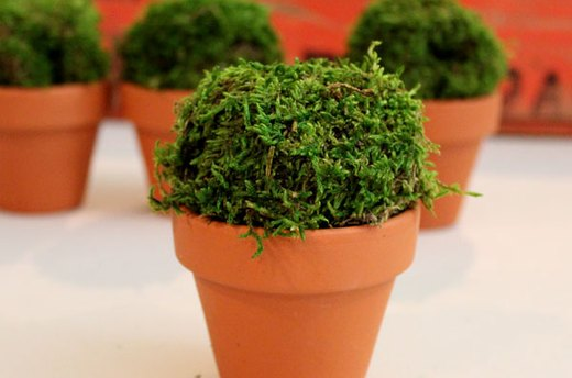 Seed Packet Topiaries - Step 1