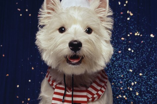Festive Pets: Dressing Santa Dog for the Holidays