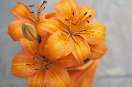 Aromatic Flowers to Plant: Lily