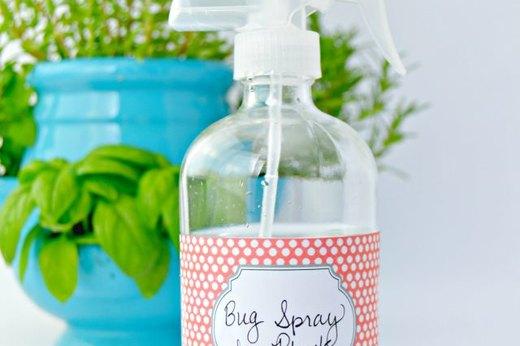 Create a Bug Spray for Plants