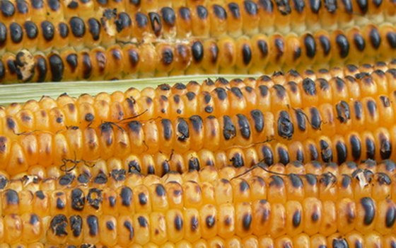 Roasting is one method for cooking corn and other vegetables.