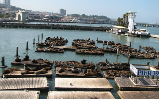 Sea lions are among the regular visitors to Pier 39.