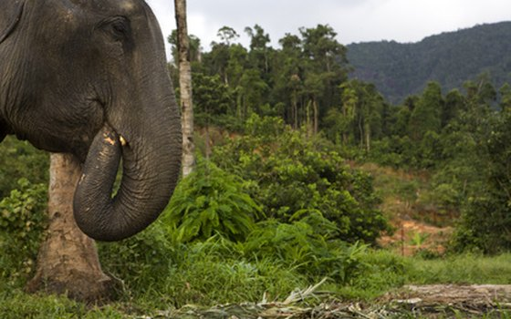 Visitors to the Thai National Forests may see an elephant.