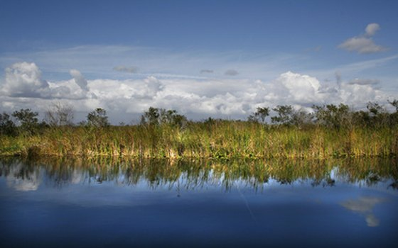 Stately palms are reflected in the waters of the Everglades.