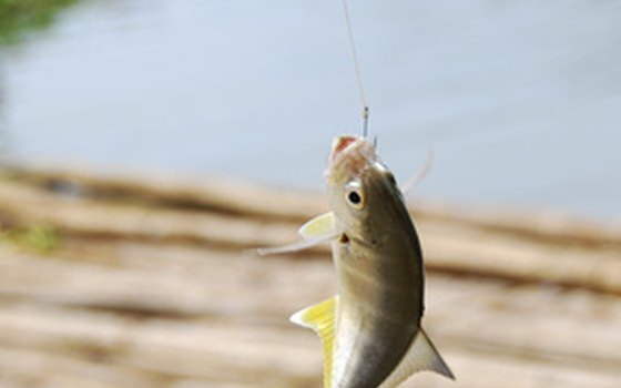 Anglers catch fresh water and salt water species.