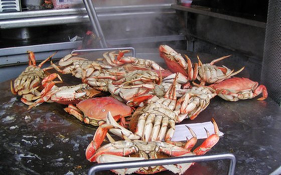 Make a meal of the famed Chesapeake Bay blue crabs.