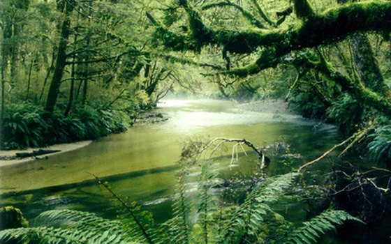 New Zealand is home to a wide variety of ecosystems.