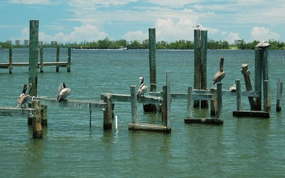 If you fish from a pier, you'll see pelicans waiting for their fish dinner.