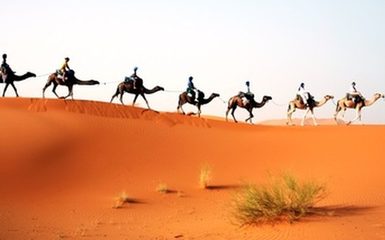 Saga Tours eight-day trek will take you via camel into the Sahara Desert.