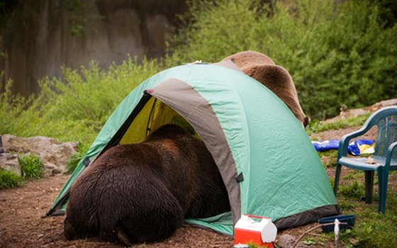 Proper food storage and disposal are not optional when camping in Alaska.
