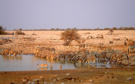January and February are the driest months, attracting animals to watering holes.