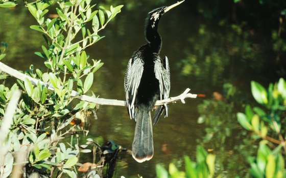 The Everglades is home to a variety of birds.