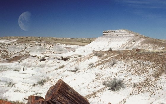 Drive or hike in Petrified Forest National Park en route to the Grand Canyon.
