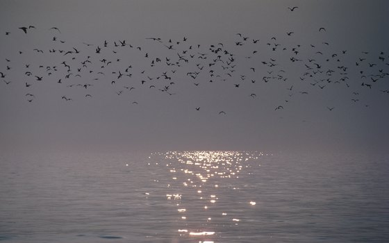 Beach lovers and migratory birds flock to Sterling State Park along Lake Erie.