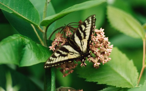 Callaway Gardens is home to one of the largest butterfly conservatories in the country.